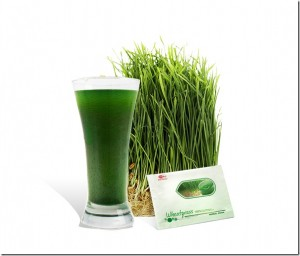wheatgrass-source-of-nutrients_thumb