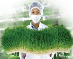 Scientist_Holding_Wheatgrass