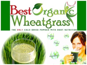 Best Organic Wheatgrass Powder